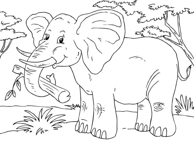 Malvorlage Elefant | Ausmalbild 23015.