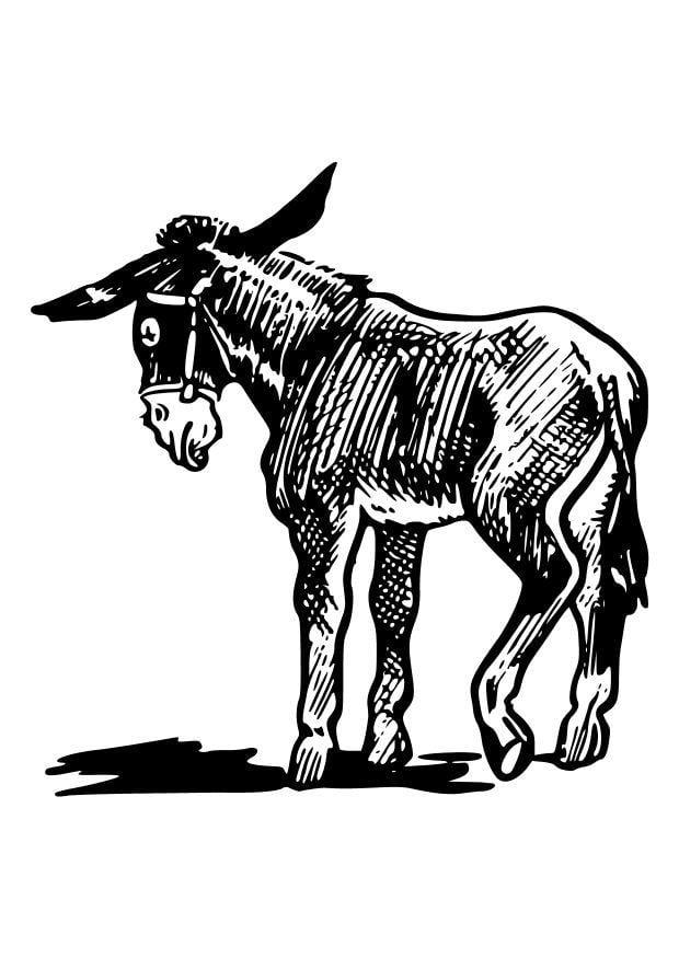 Malvorlage Esel Kostenlose Ausmalbilder Zum Ausdrucken