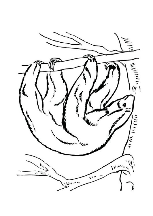 Malvorlage Faultier | Ausmalbild 12530.