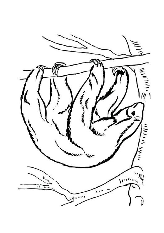 Malvorlage Faultier Ausmalbild 12530