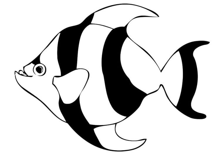 Malvorlage Fisch Ausmalbild 20681