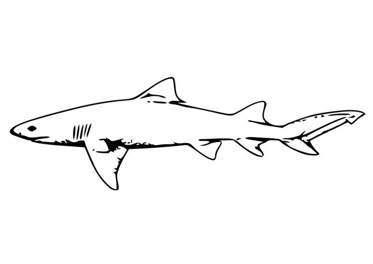 malvorlage fisch  hai  ausmalbild 20689