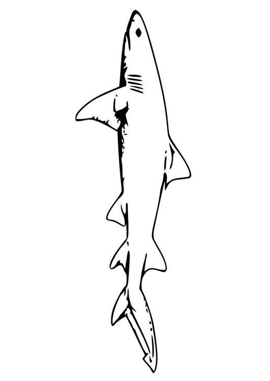 Fein Große Weiße Hai Malvorlagen Zum Ausdrucken Galerie - Ideen ...