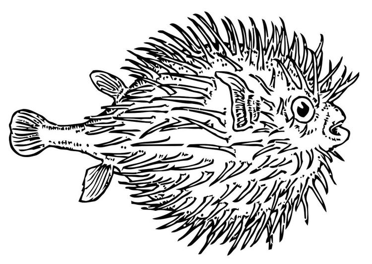 Malvorlage Fisch - Kugelfisch | Ausmalbild 19623.