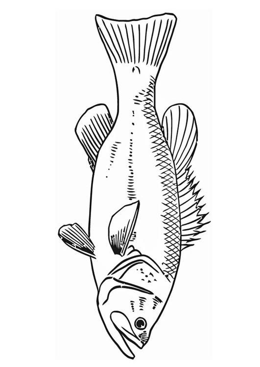 Malvorlage Fisch | Ausmalbild 16586.