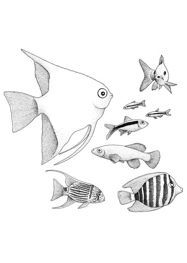 Malvorlage Fische | Ausmalbild 9402.