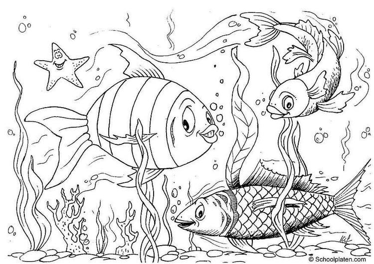 malvorlage fische  kostenlose ausmalbilder zum ausdrucken