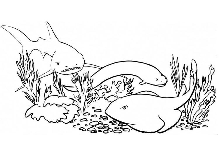 Malvorlage Fische Hai Kostenlose Ausmalbilder Zum
