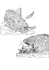 Malvorlage  Fische und Garnelen säubern Fisch