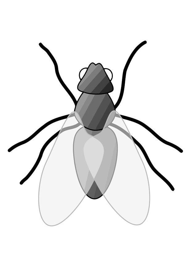 Tolle Anatomie Der Fliege Zeitgenössisch - Anatomie Von Menschlichen ...