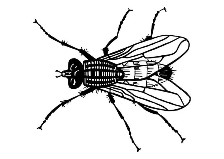 Tolle Fliegen Insekt Malvorlagen Zeitgenössisch ...