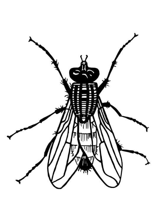 Wunderbar Fliegen Insekt Malvorlagen Ideen - Entry Level Resume ...
