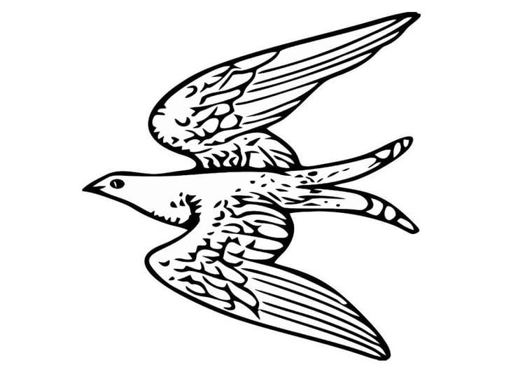 Malvorlage fliegender Vogel | Ausmalbild 20703.