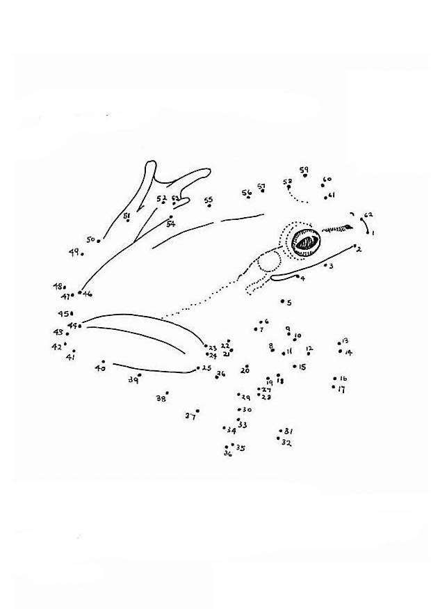 Malvorlage Frosch | Ausmalbild 12655.
