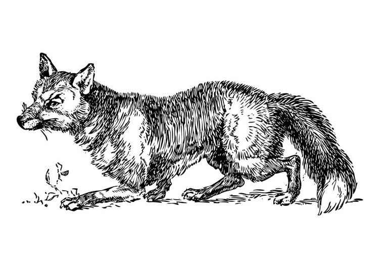 Malvorlage Fuchs Ausmalbild 17330