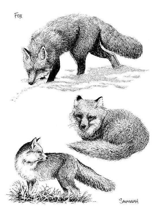 Ausmalbilder Jäger Zum Ausdrucken: Malvorlage Fuchs