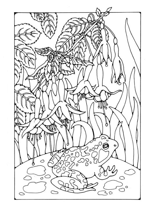 malvorlage fuchsia mit frosch  kostenlose ausmalbilder