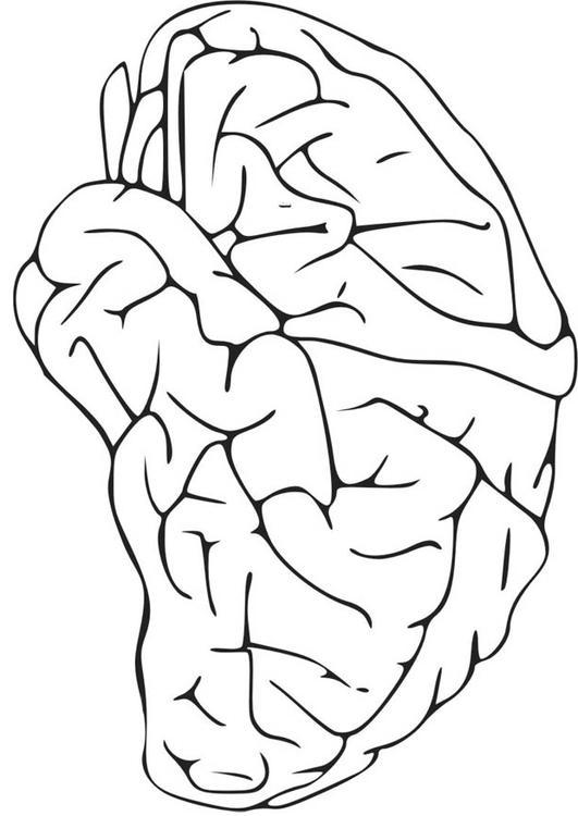 Tolle Anatomie Malvorlagen Galerie - Beispiel Zusammenfassung ...