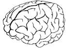 Malvorlage  Gehirn
