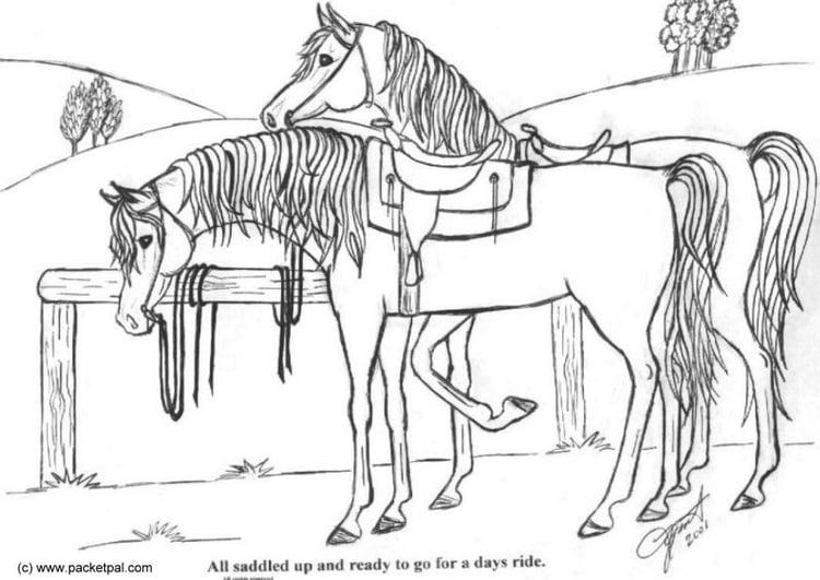 Kleurplaat Paarden Western Malvorlage Gesattelte Pferde Ausmalbild 6088