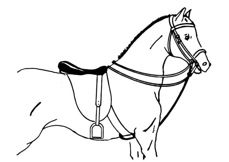 malvorlage gesatteltes pferd  ausmalbild 18896