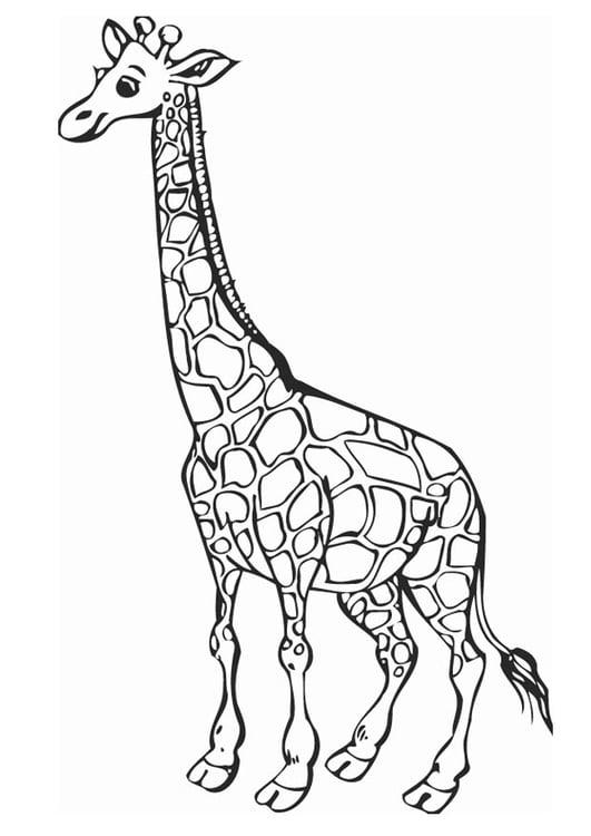 Malvorlage Giraffe   Ausmalbild 12758.