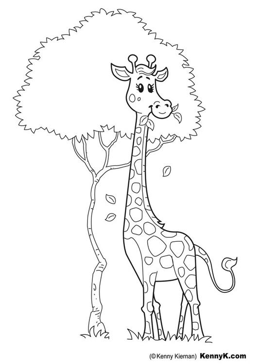 Giraffe Malvorlage Kostenlose Ausmalbilder 7