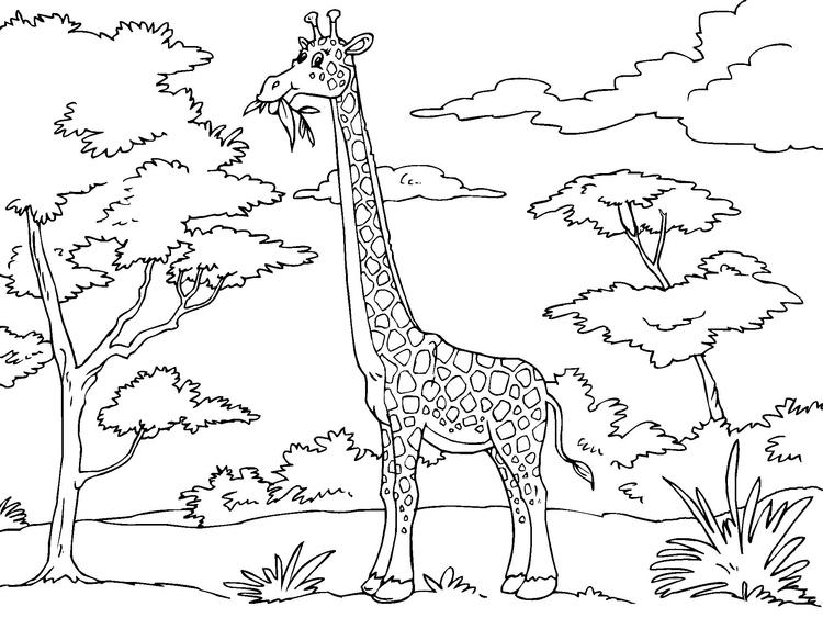 Malvorlage Giraffe | Ausmalbild 23012.