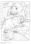 Malvorlage  grauer Seehund