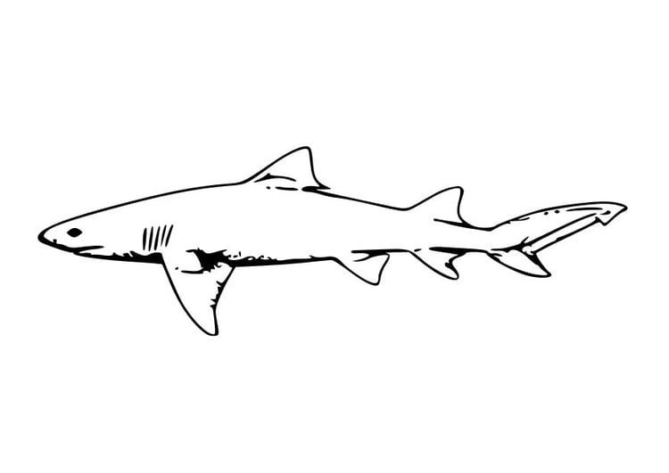 Malvorlage Hai | Ausmalbild 10228.