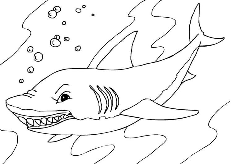 Malvorlage Hai | Ausmalbild 27232.