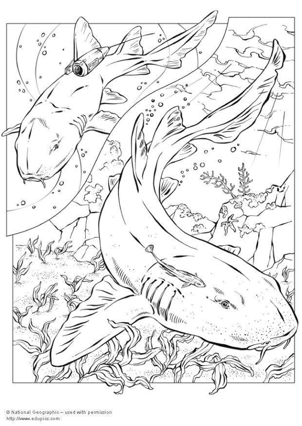 Großartig Hammerhaie Malvorlagen Bilder - Beispiel Wiederaufnahme ...