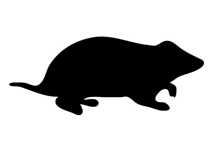 Malvorlage Hamster | Ausmalbild 10196.