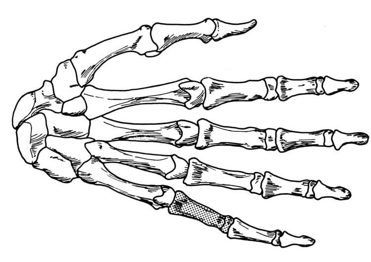 malvorlage hand  skelett  ausmalbild 18906