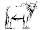 Malvorlage  heilige Kuh
