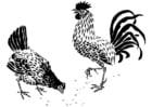Malvorlage  Henne und Hahn