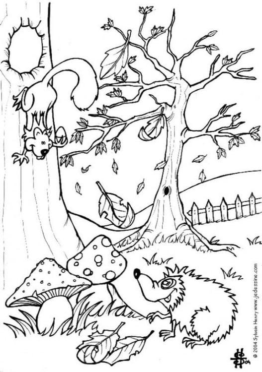 Malvorlage Herbst - Igel und Eichhörnchen | Ausmalbild 6444.
