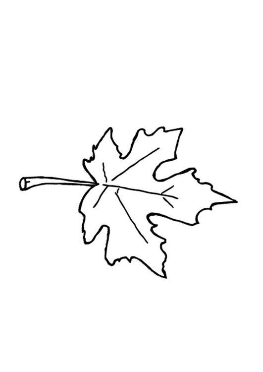 Malvorlage Herbstblatt Ausmalbild 9601