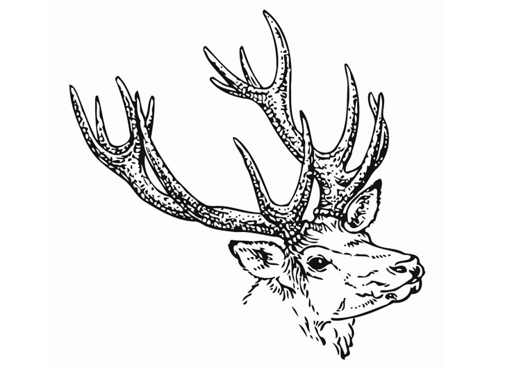 Geometric Coloring Pages Elk