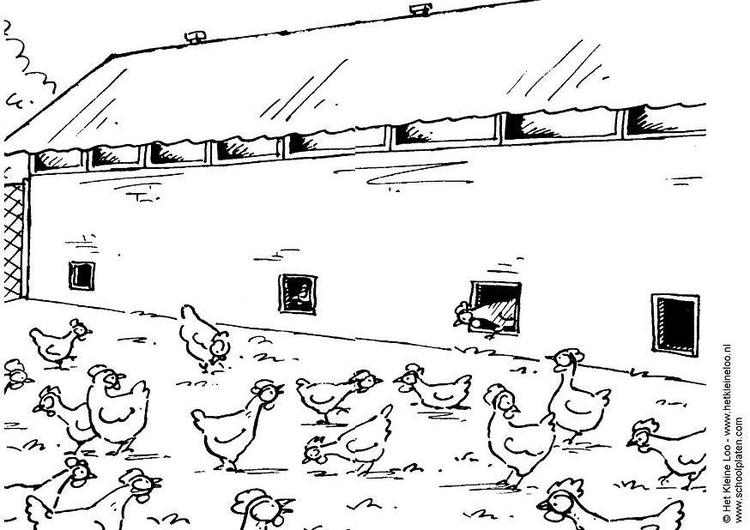 malvorlage hühnerstall  ausmalbild 3809