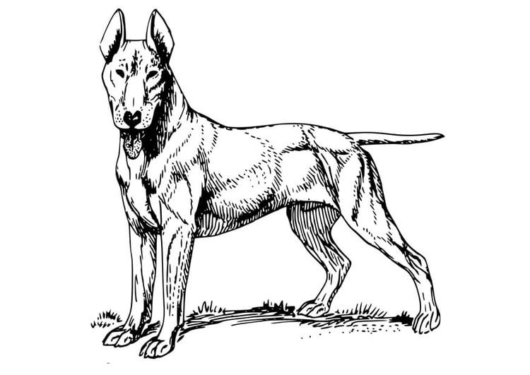 malvorlage hund  bull terrier  kostenlose ausmalbilder