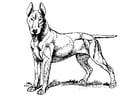 Malvorlage  Hund - Bull Terrier
