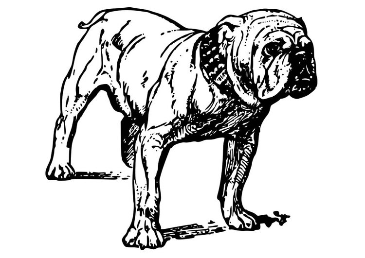 malvorlage hund  bullodogge  kostenlose ausmalbilder zum