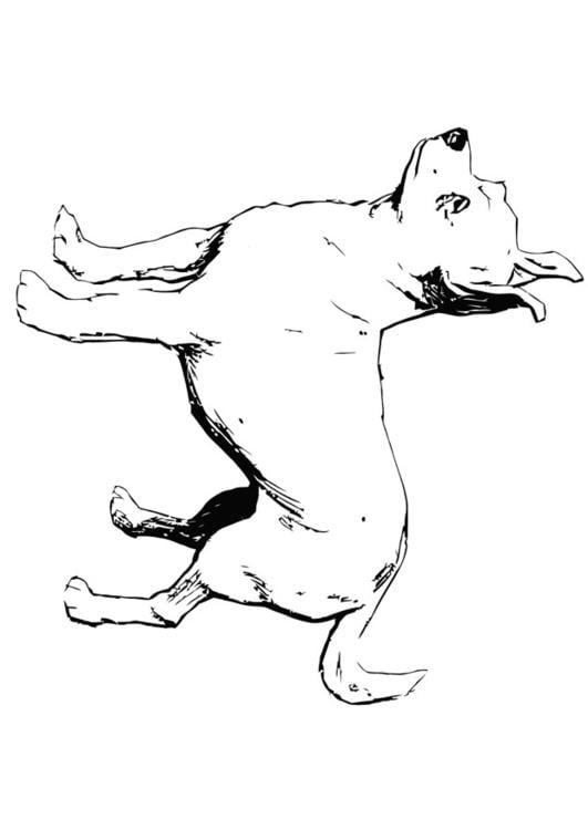 Malvorlage Hund - Chihuahua   Ausmalbild 13704.