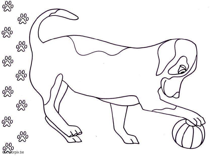Malvorlage hund ausmalbild 5686 for Cane disegno da colorare
