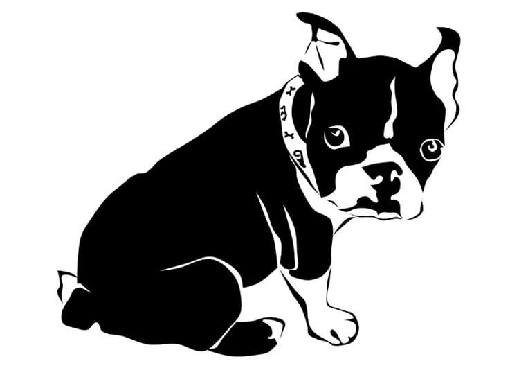 Malvorlage Hund - französische Bulldogge | Ausmalbild 27818.