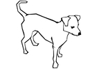 Malvorlage  Hund