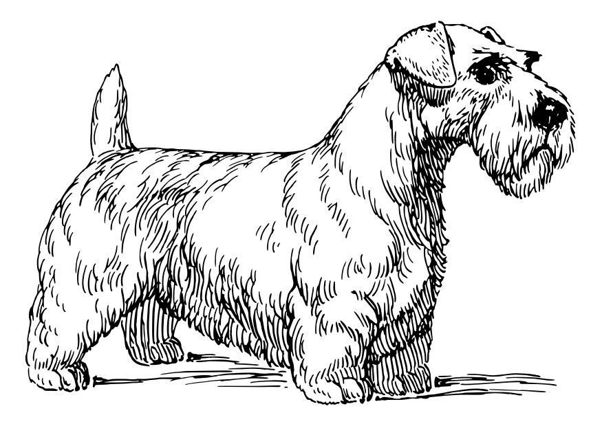 malvorlage hund  sealyham terrier  kostenlose
