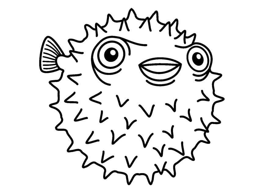 Malvorlage igelfisch ausmalbild 23083 for Pesciolini da colorare e stampare