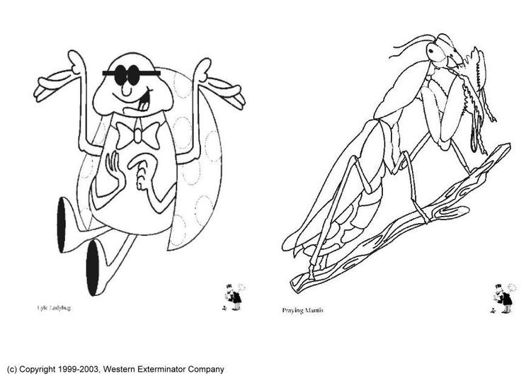Malvorlage Insekten | Ausmalbild 6138.